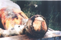 Cadavere in Cecenia.